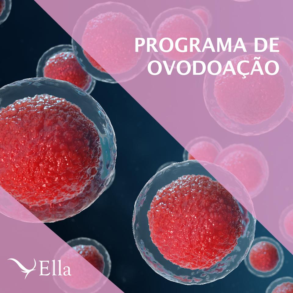 Read more about the article Programa de ovodoação